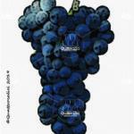 pinot meunier vitigno