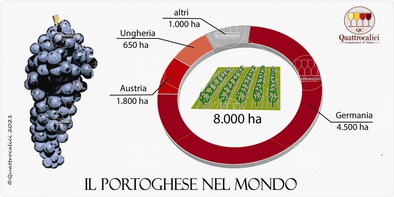 il vitigno portoghese nel mondo