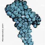 primitivo vitigno