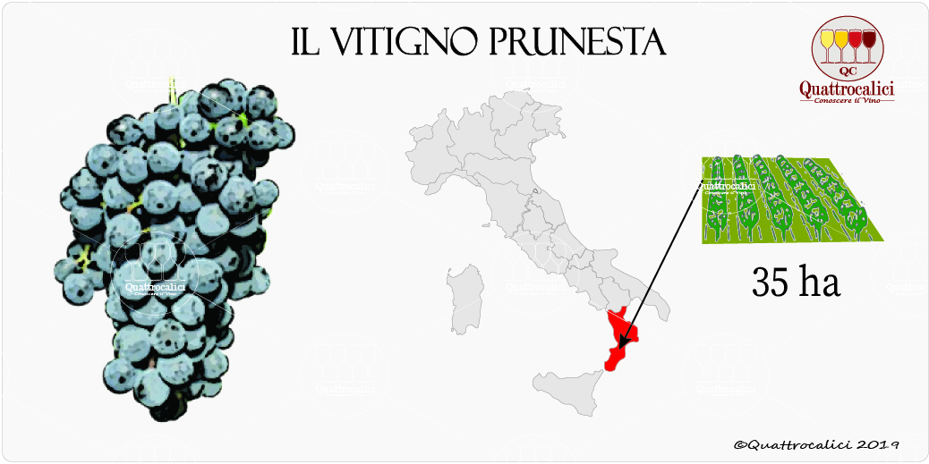 vitigno prunesta