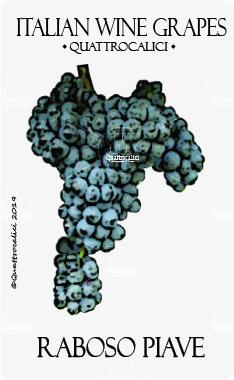 raboso piave vitigno