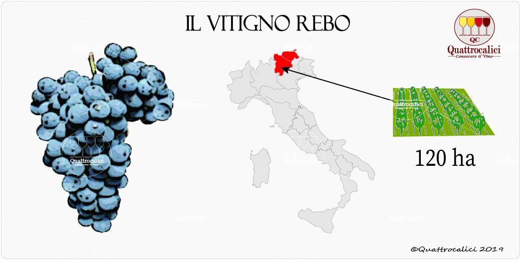vitigno rebo