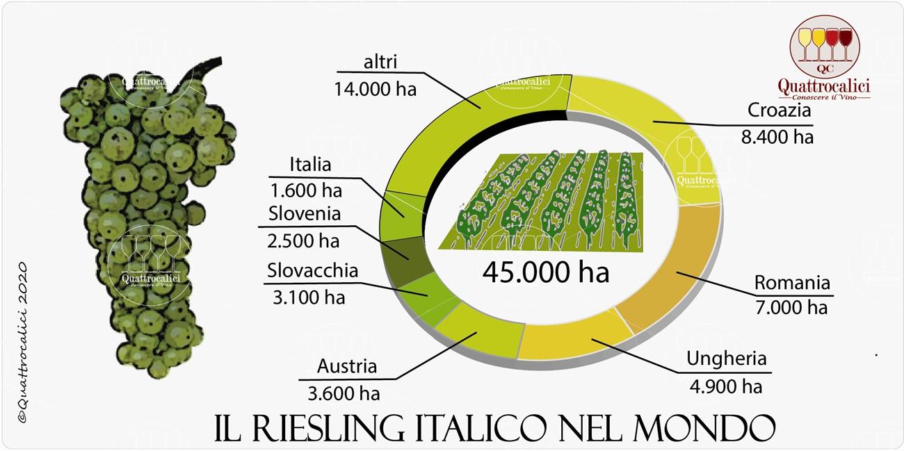 il riesling italico nel mondo