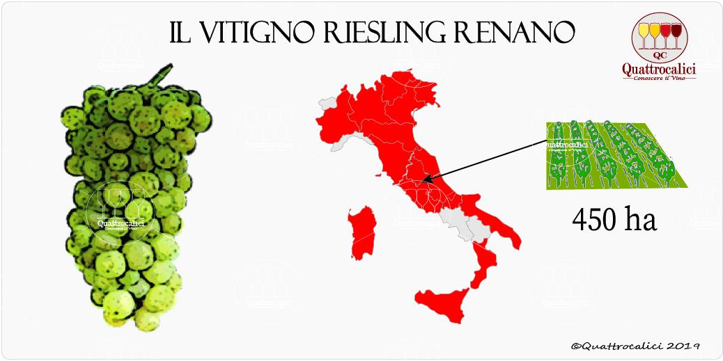 vitigno riesling renano