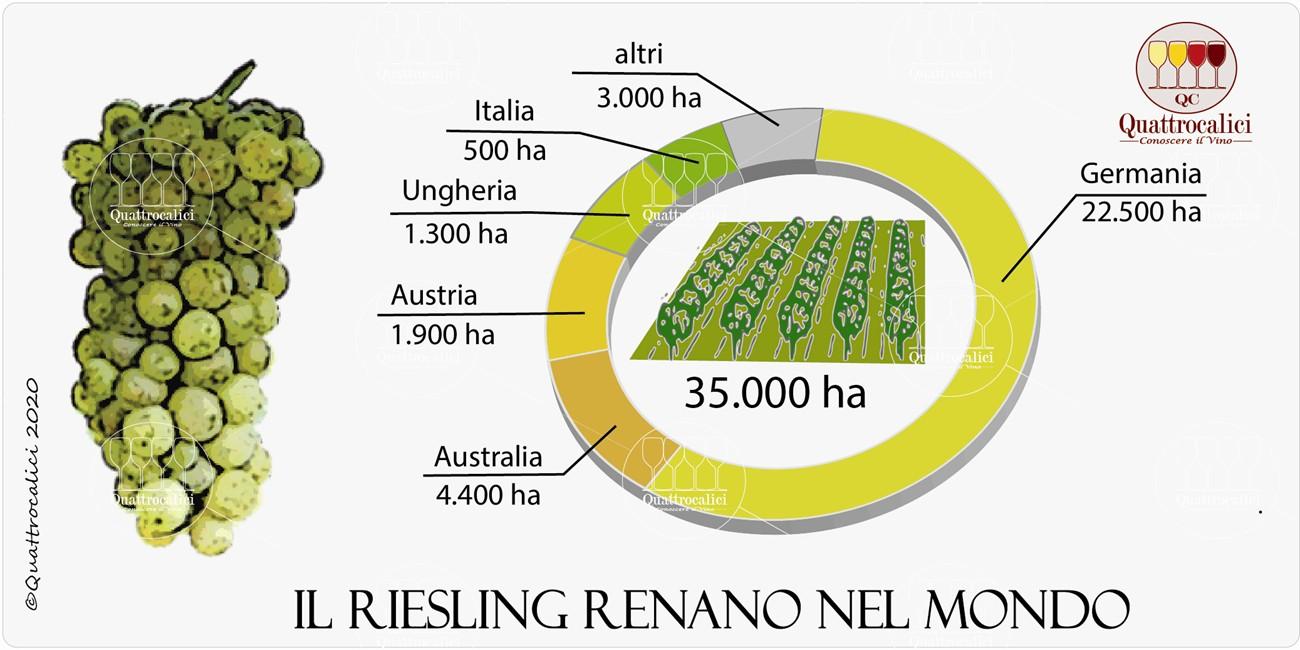 il riesling renano nel mondo