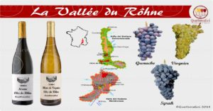 Valle del Rodano - I vini