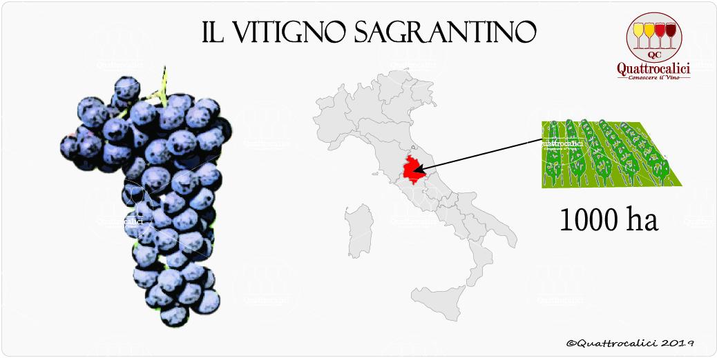 vitigno sagrantino