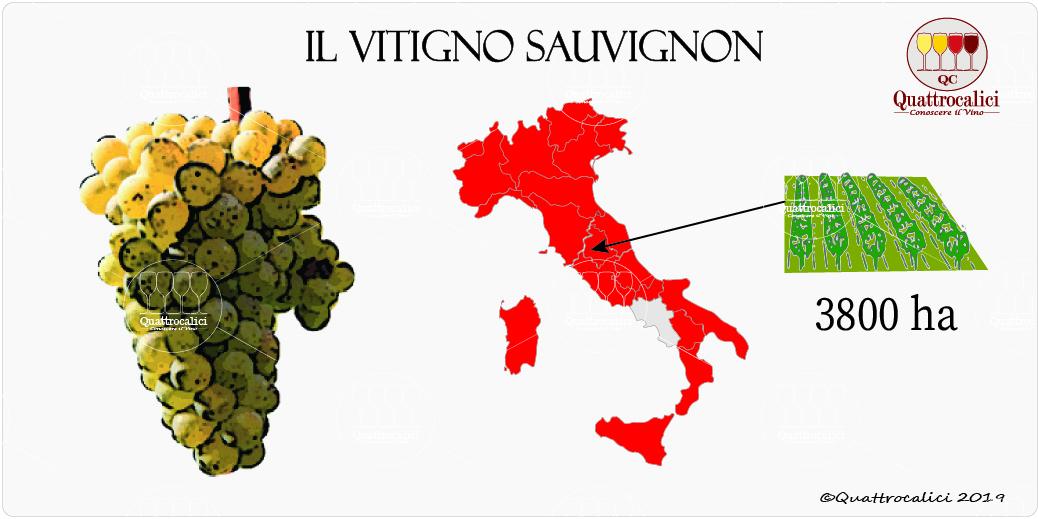 vitigno sauvignon