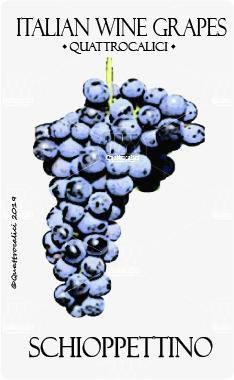 schioppettino vitigno