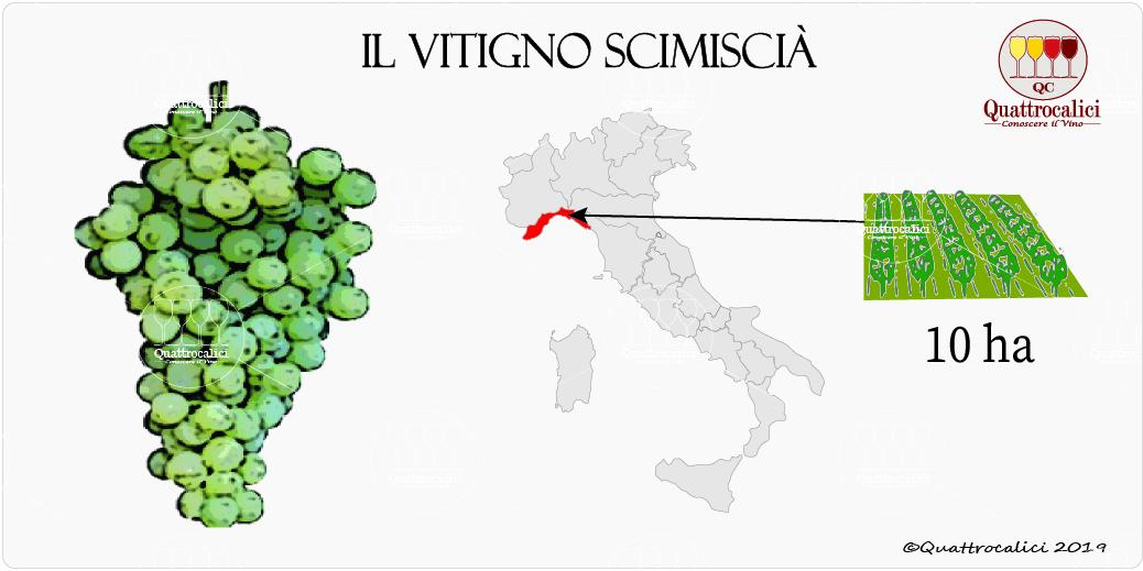 vitigno scimiscià