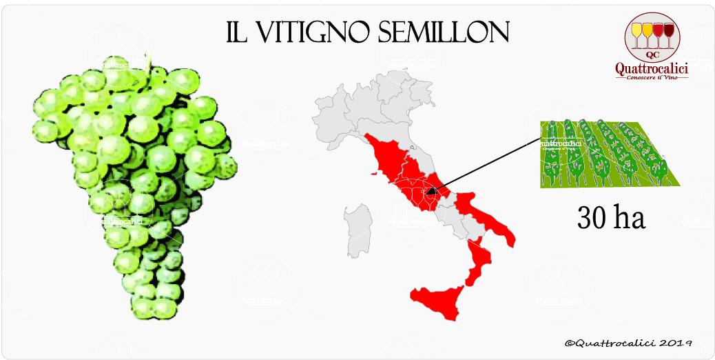 vitigno semillon