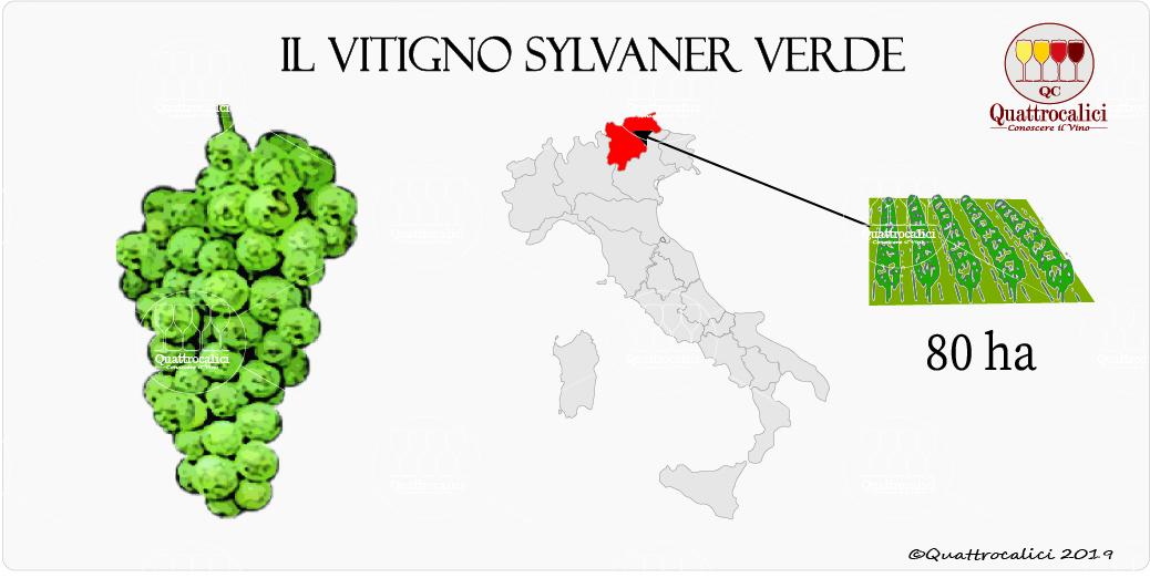 vitigno sylvaner verde