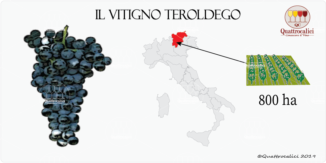 vitigno teroldego