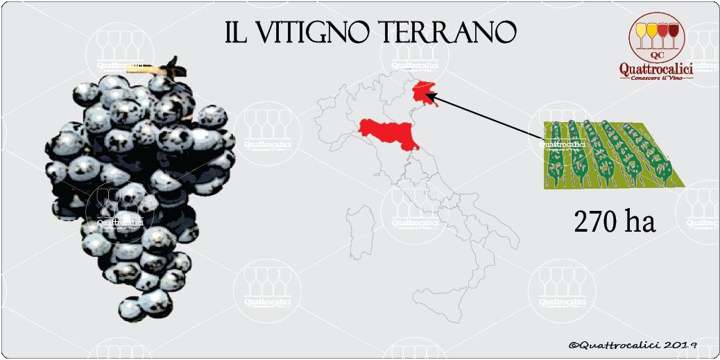 vitigno terrano