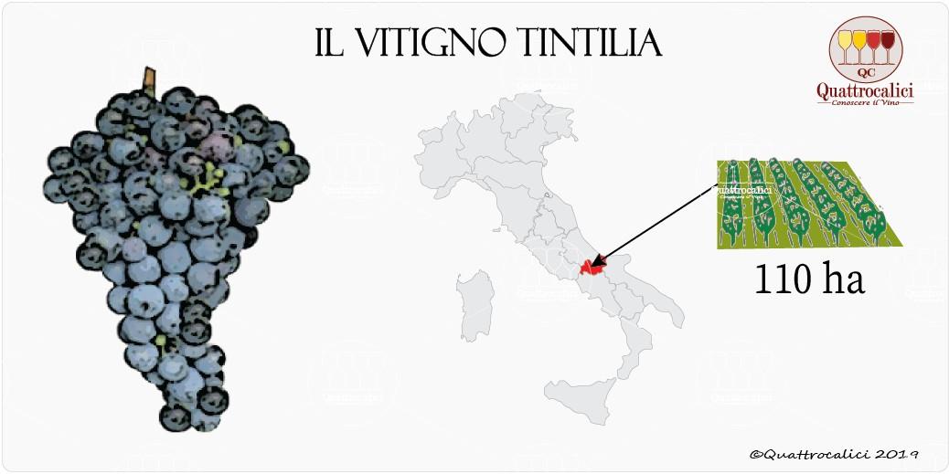 vitigno tintilia
