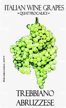 trebbiano abruzzese vitigno