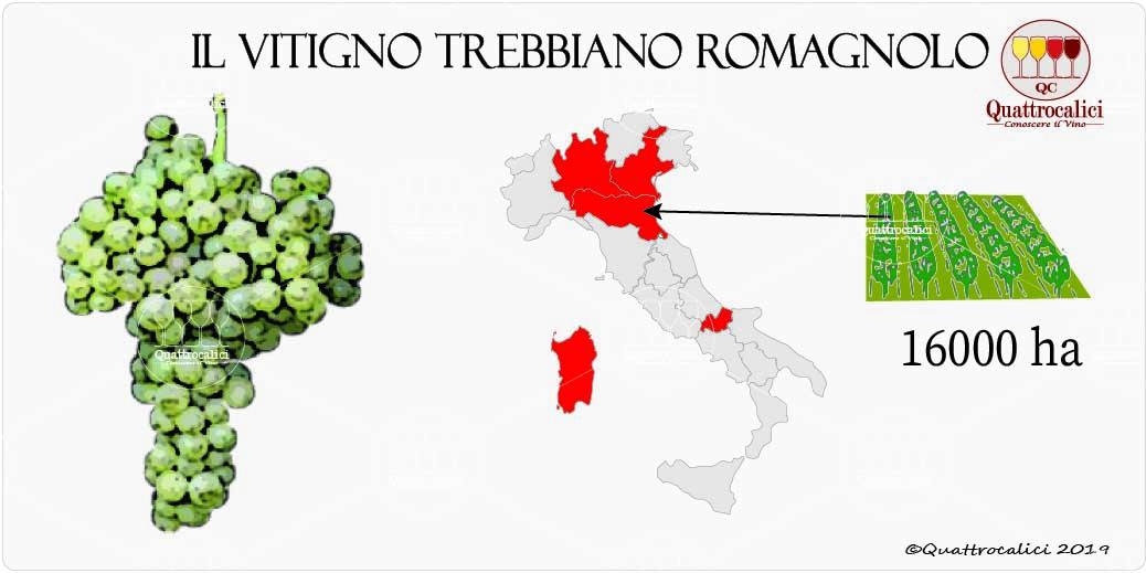 vitigno trebbiano romagnolo