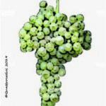 trebbiano romagnolo vitigno