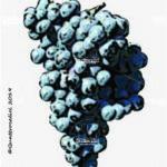 turchetta vitigno