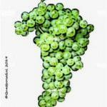 ucelut vitigno