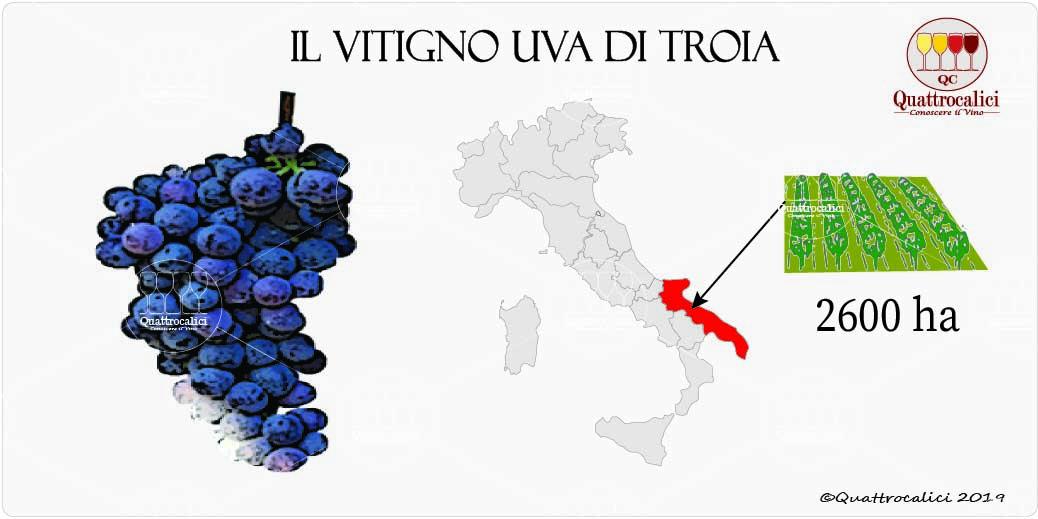 vitigno uva di troia