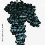 uva longanesi vitigno