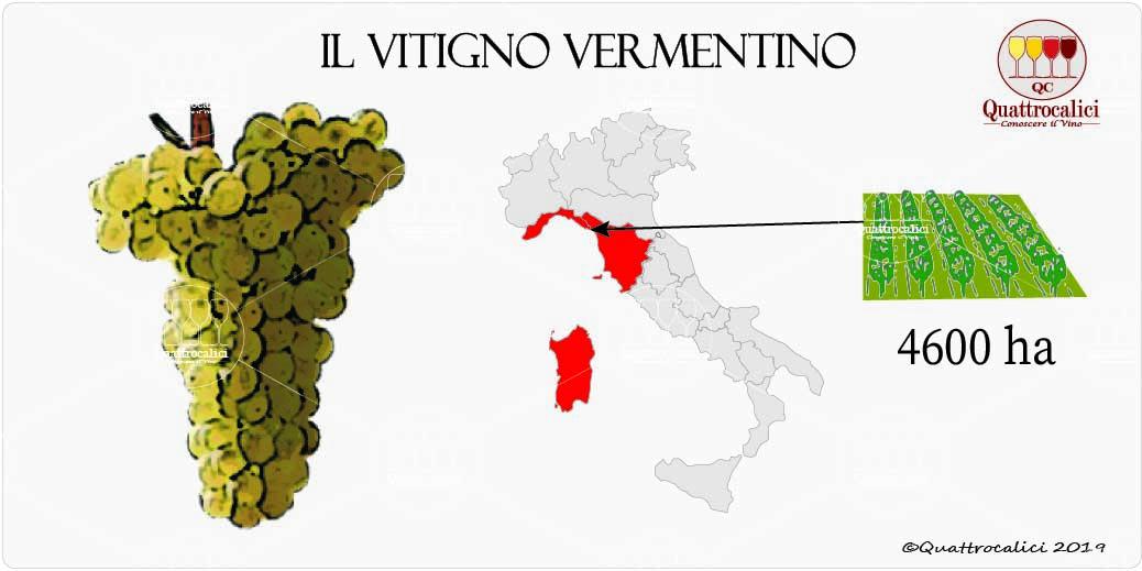vitigno vementino
