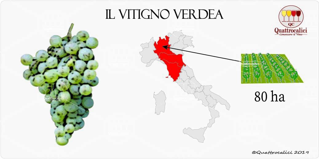 vitigno verdea