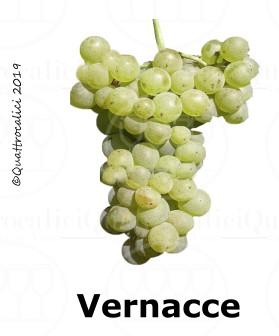 Vernacce - Famiglia di Vitigni