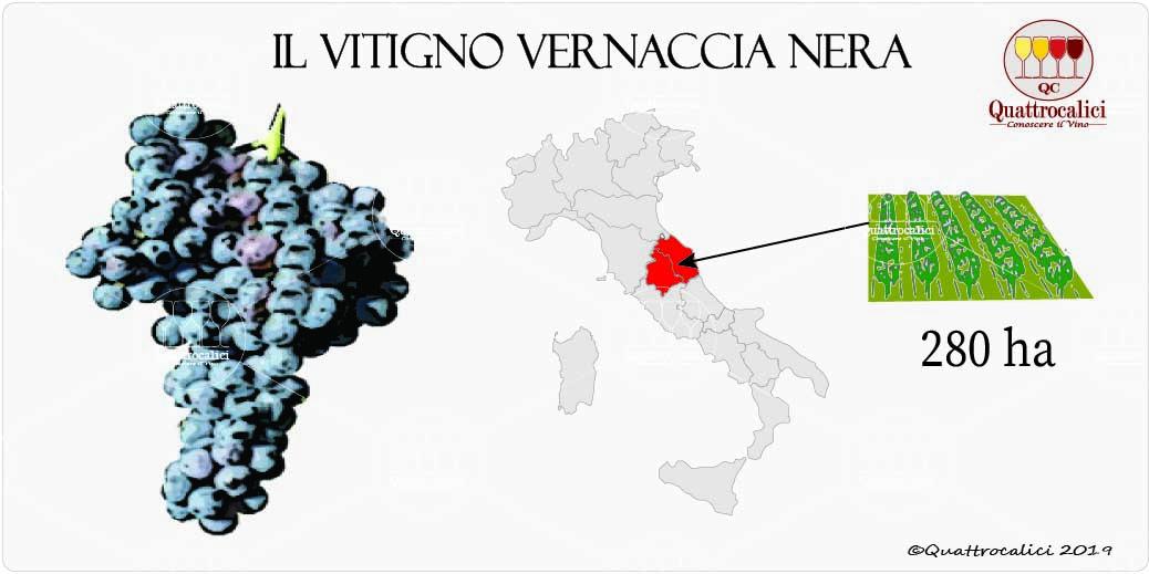 vitigno vernaccia nera