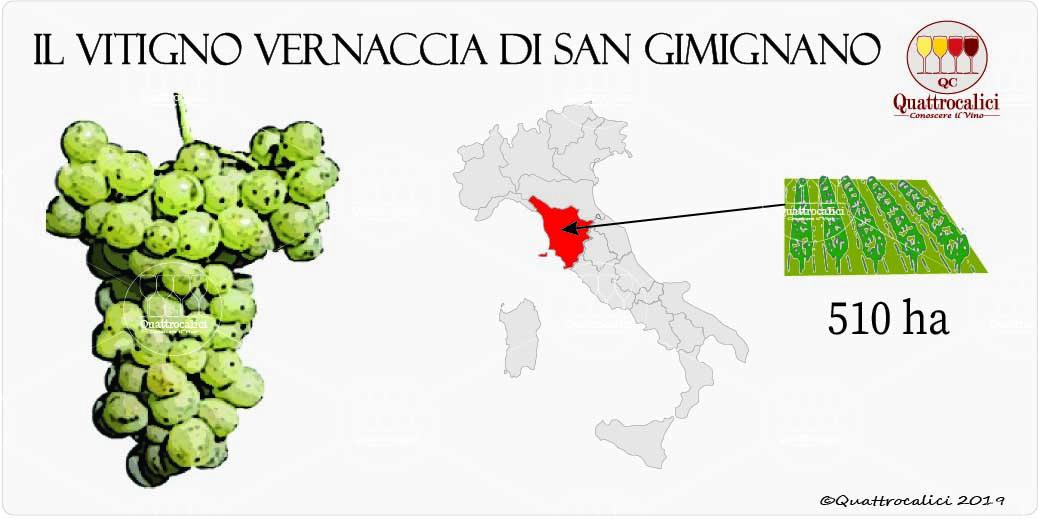 vitigno vernaccia di san gimignano
