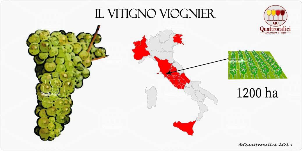 vitigno viognier