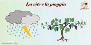 la vite e la pioggia