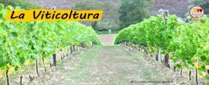 La viticoltura