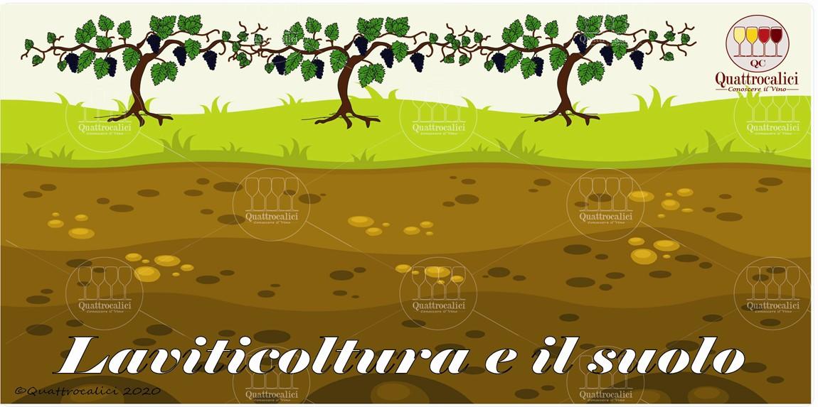 la viticoltura e il suolo