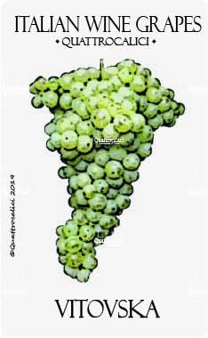 vitovska vitigno