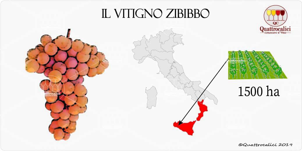 vitigno zibibbo
