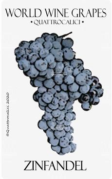 zinfandel vitigno