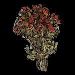Fiori rossi secchi